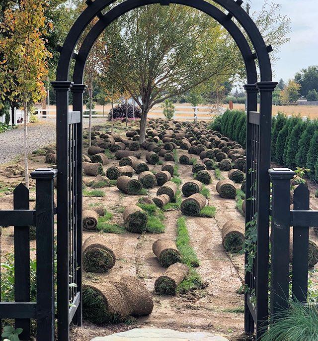 Garden Answer (gardenanswer) • Instagram photos and