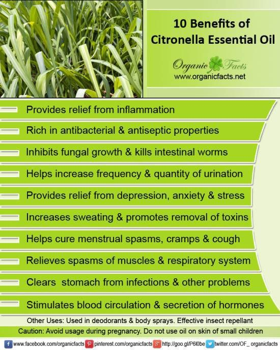 Health Benefits Of Citronella Essential Oil Health Beauty Pinterest Gardens Awesome And