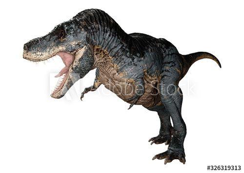 3D Rendering Tyrannosaurus Rex on White - Buy this stock illustration and explore similar illustrations at Adobe Stock