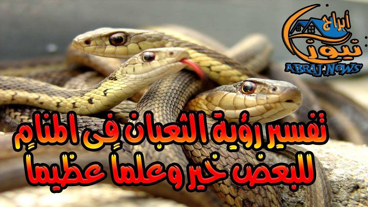 تفسير رؤية الثعبان فى المنام للبعض خير وعلما عظيما تفسير الاحلام In 2020 Snake