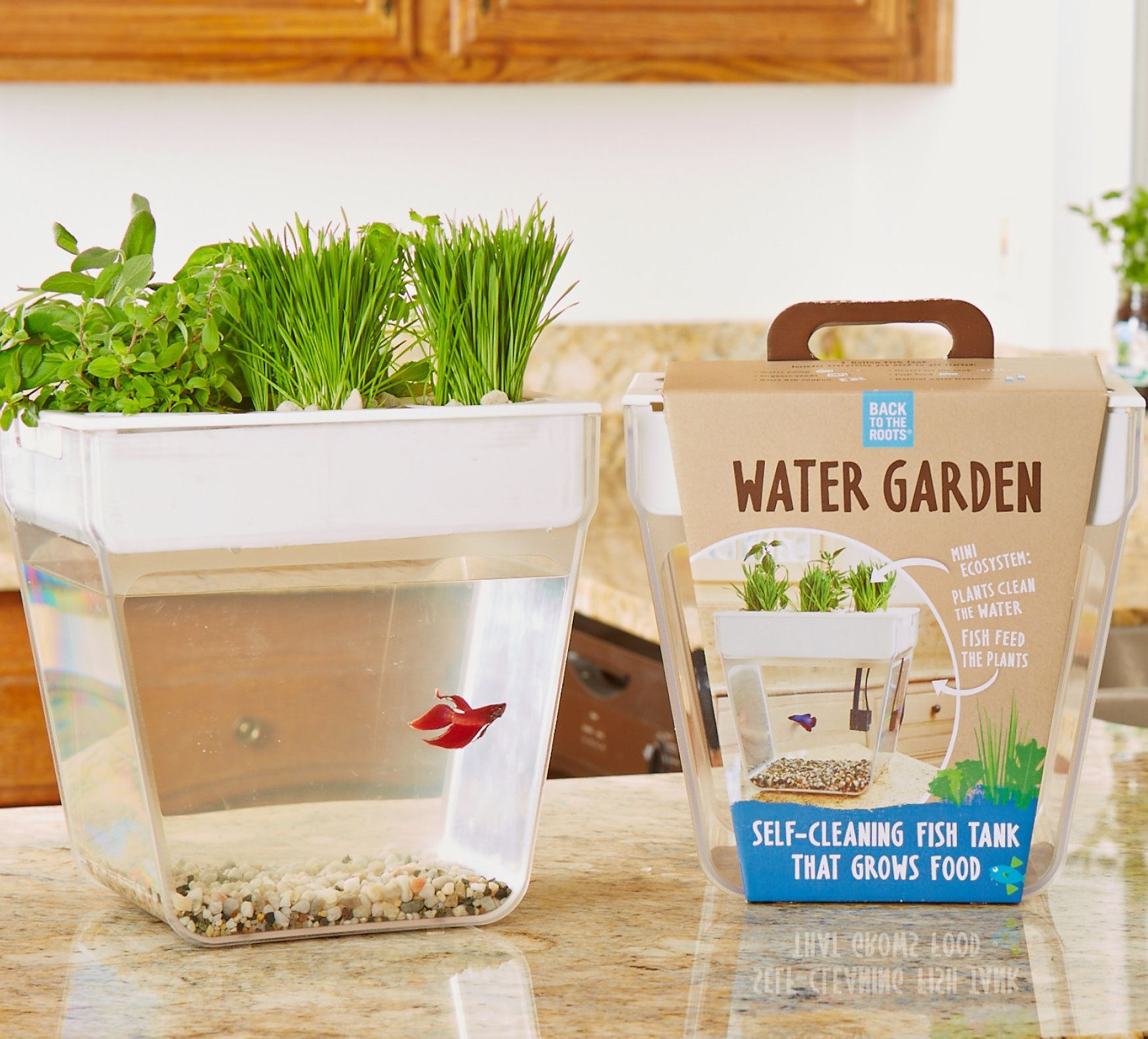 Self Cleaning Fish Tank Garden Water Garden 20 Gardens Creative Gifts And Fish Tanks