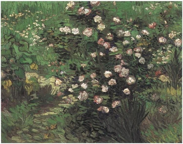 Rosebush in Blossom ~  Painting, Oil on Canvas  Arles: April, 1889  National Museum of Western Art  Tokyo, Japan, Asia  F:580,JH:1679