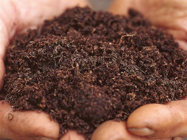 Peat-Based Potting Mix in Choosing the Right Potting Mix from HGTV