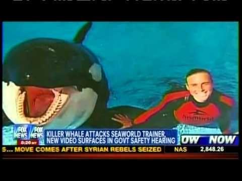 Killer Whale Attacks Trainer - Sea World   FREE Tilikum   Killer