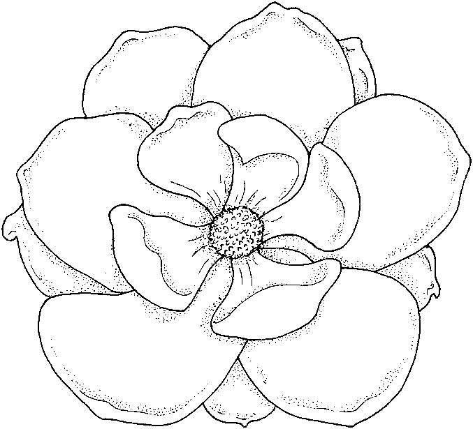 Flowers coloring pages | color printing | Flower | Coloring pages ...