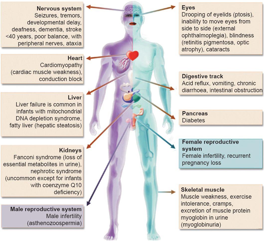 mitochondria diseases - ☮ * ° ♥ ˚ℒℴѵℯ cjf | Mitochondrial disease ...