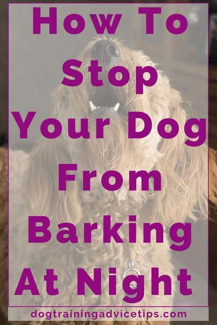 Submissive Assessed Cool Dog Training More Bonuses Dog Barking