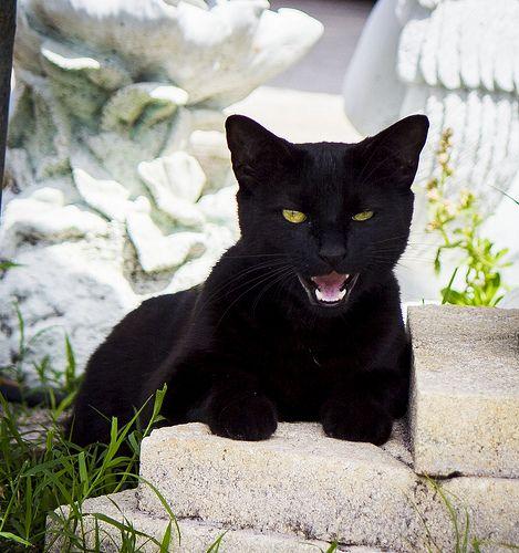 kitty1111