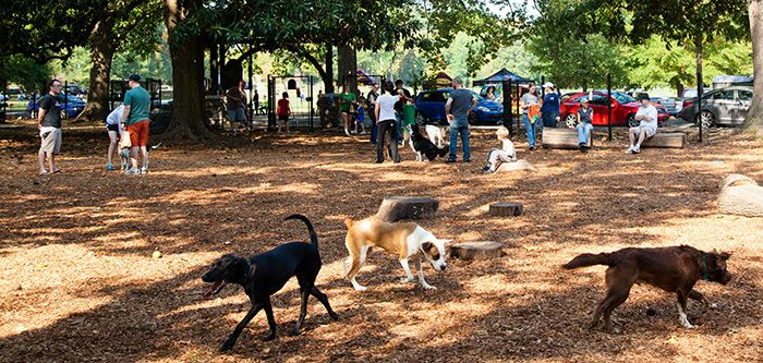 Ruff Times Dog Parks In Memphis Dog Park Dog Friends Dogs