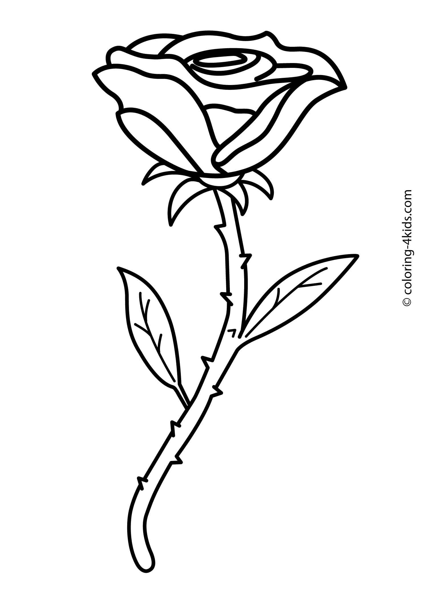 Rose flower coloring pages for kids, printable, 1 | Places to Visit ...