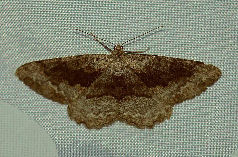 In Deutschland Gibt Es Uber 3700 Arten Von Schmetterlingen In Form Von Tagfalter Nachtfalter Und Kleinschmetterlinge Die Aufgrund I Nachtfalter Falter Und Insekten