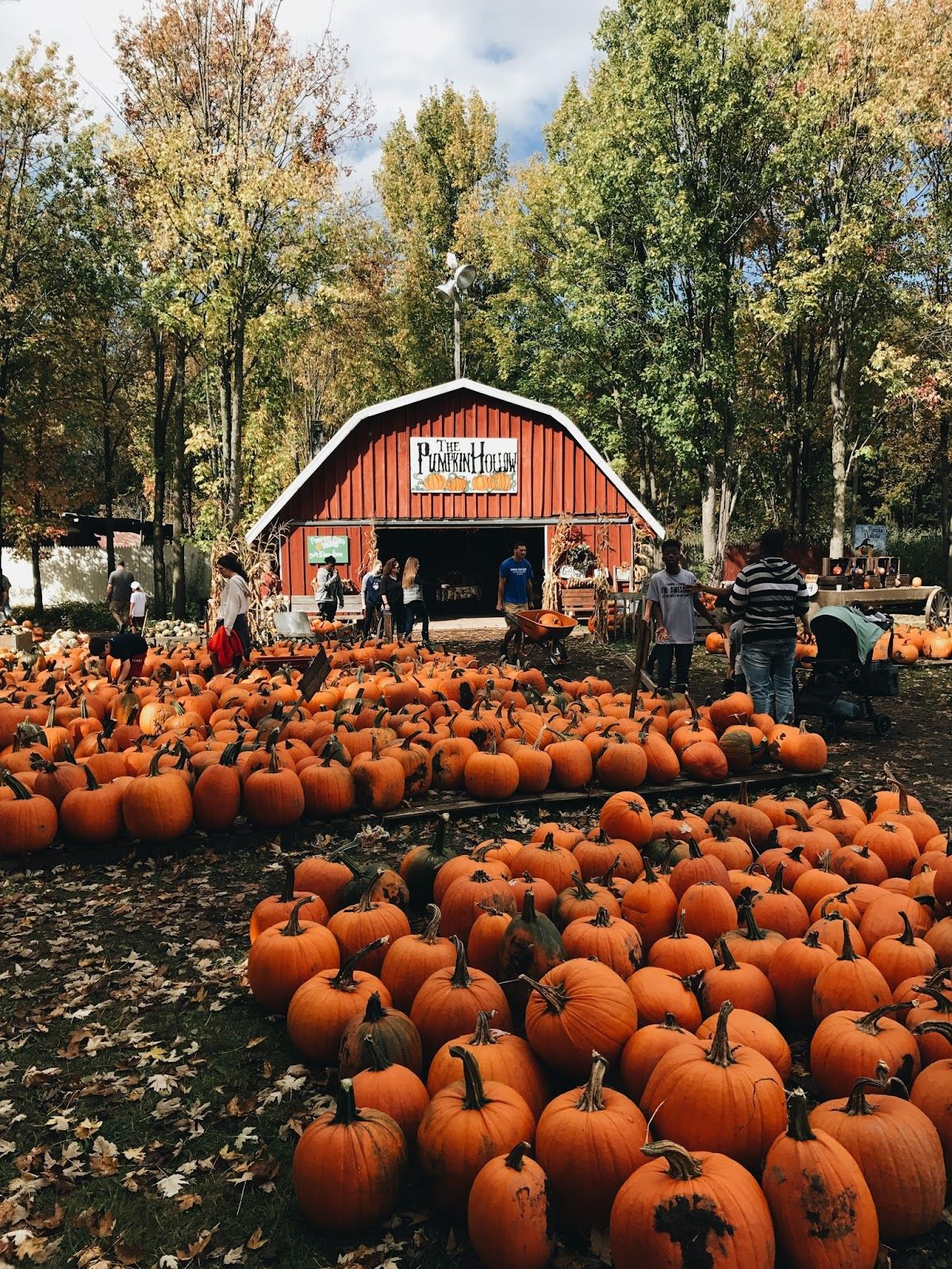My Friend And I Found This Pumpkin Patch Nearby And Decided To Take A Trip There Today It Was So Much Fun And So Ador Autumn Aesthetic Pumpkin Pumpkin Picking