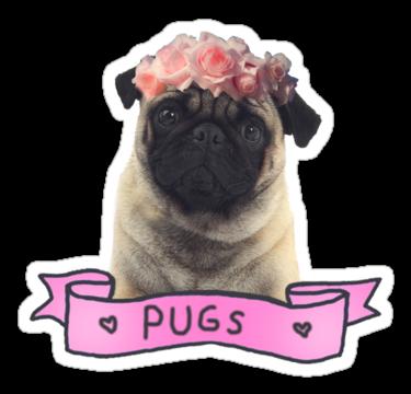 Pug by kuroko1033