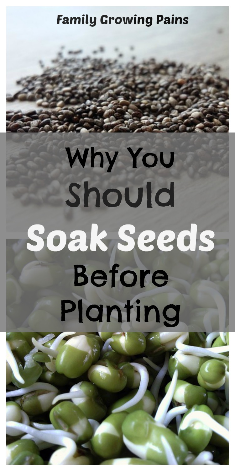 Is Soaking Seeds Before Planting Necessary? » Fami