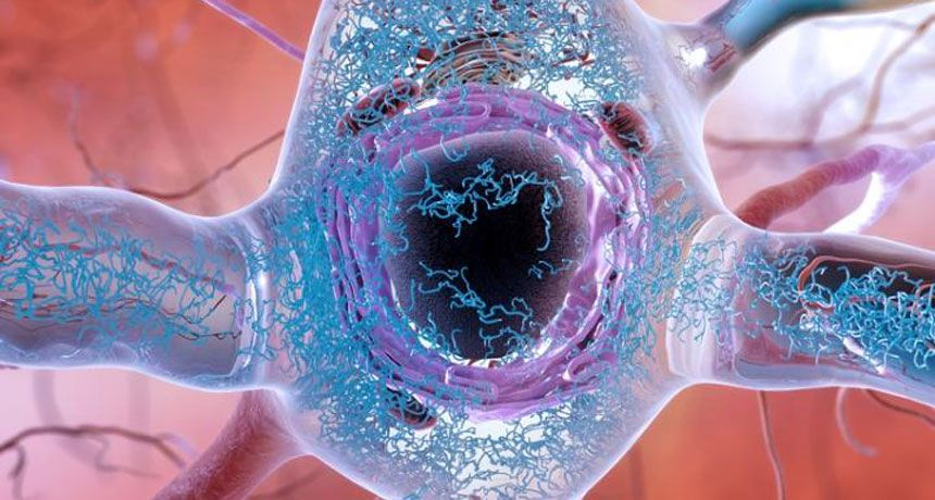 Overthehill cells may cause trouble in the aging brain