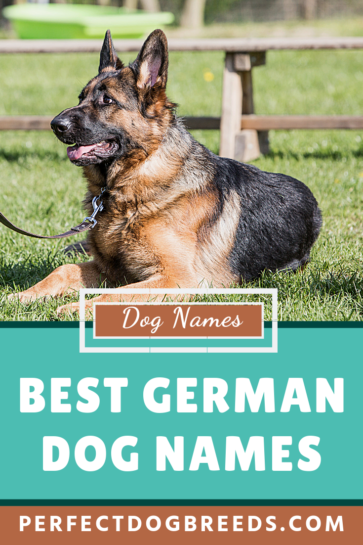 Best German Dog Names German Dog Names Dog Names German Dogs