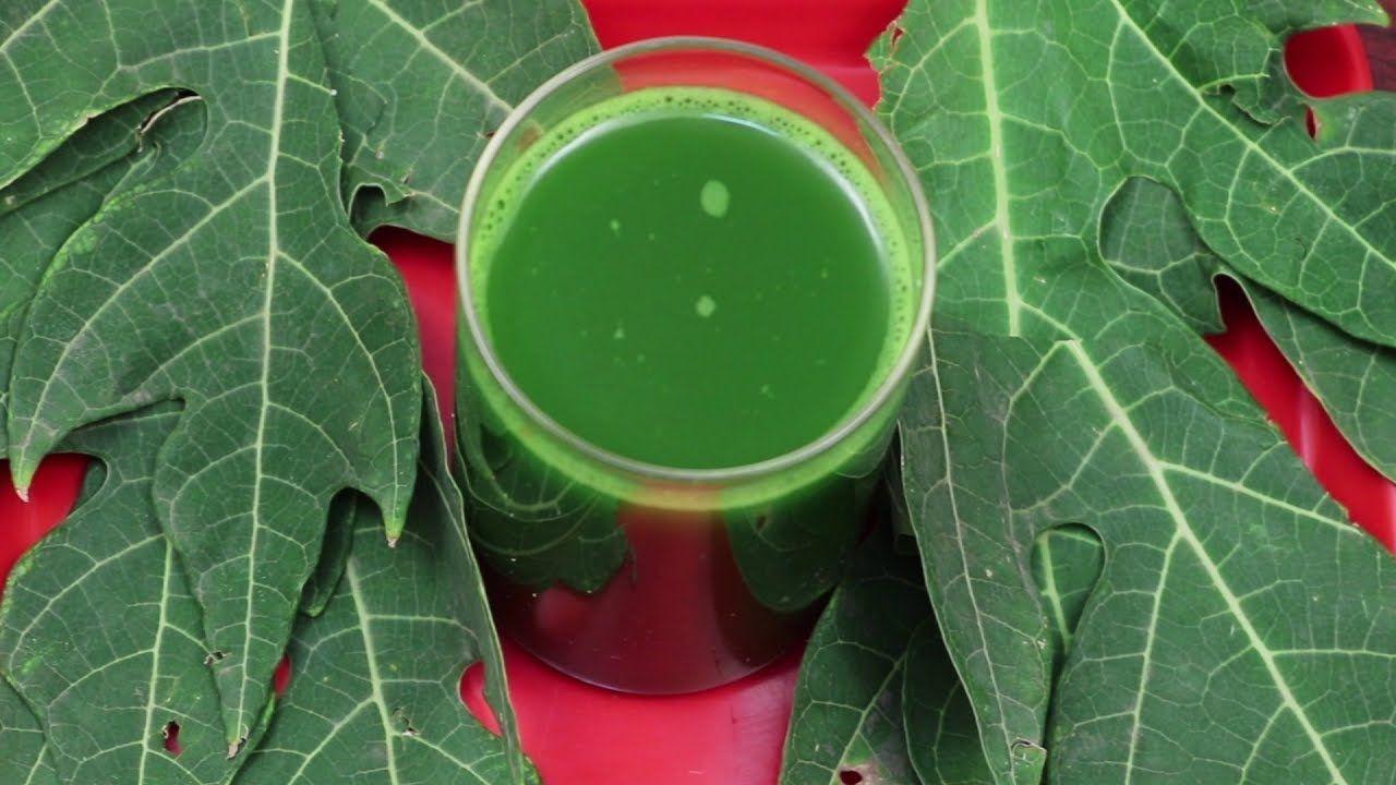 Papaya Leaf Juice For Curing Dengue Fever | Health Juice | General