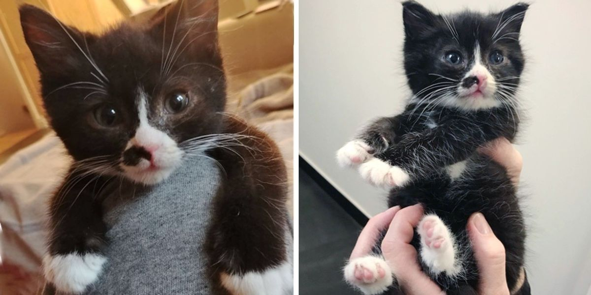 Kitten Rescued Alone Outside Crawls Onto A Warm Lap And Won T Let Go In 2020 Kitten Rescue Tuxedo Kitten Kittens