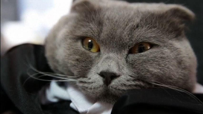 El nuevo gerente de comunicaciones de #Catbox es realmente un gato http://uni.vi/OzRuk