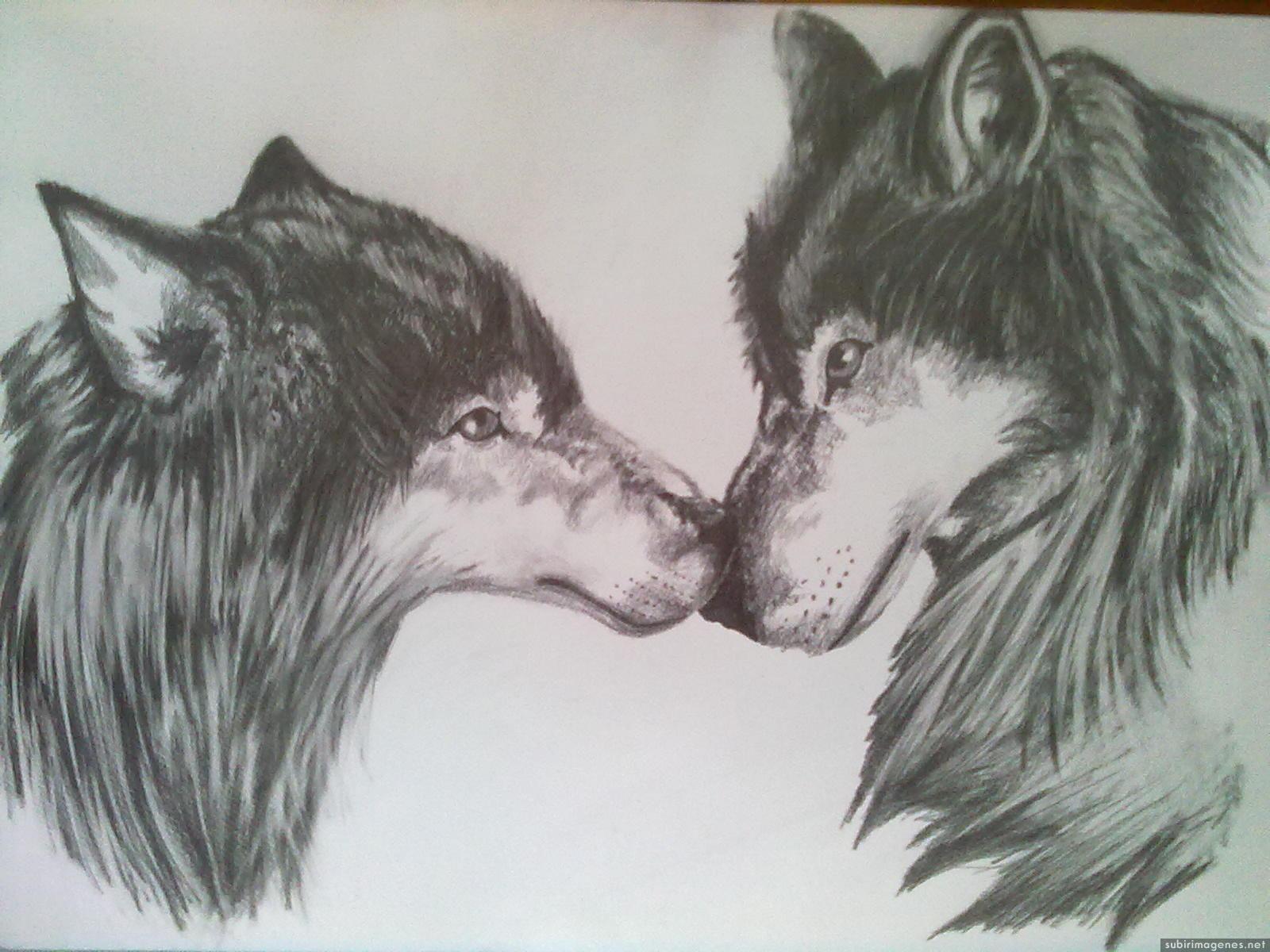 dibujos a lapiz de lobos enamorados  Buscar con Google  dibujos