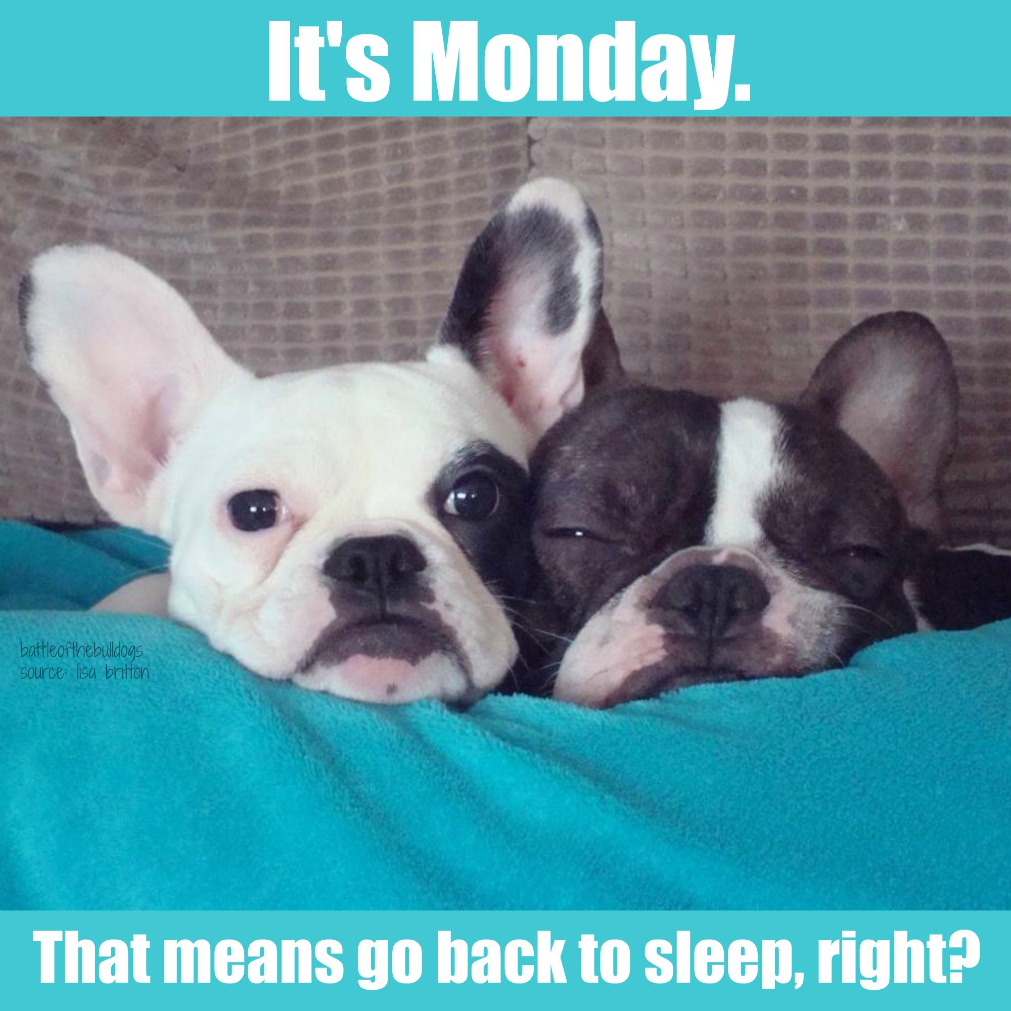 It S Monday That Means Go Back To Sleep Right Cute Dogs And Puppies French Bulldog Cute Dogs