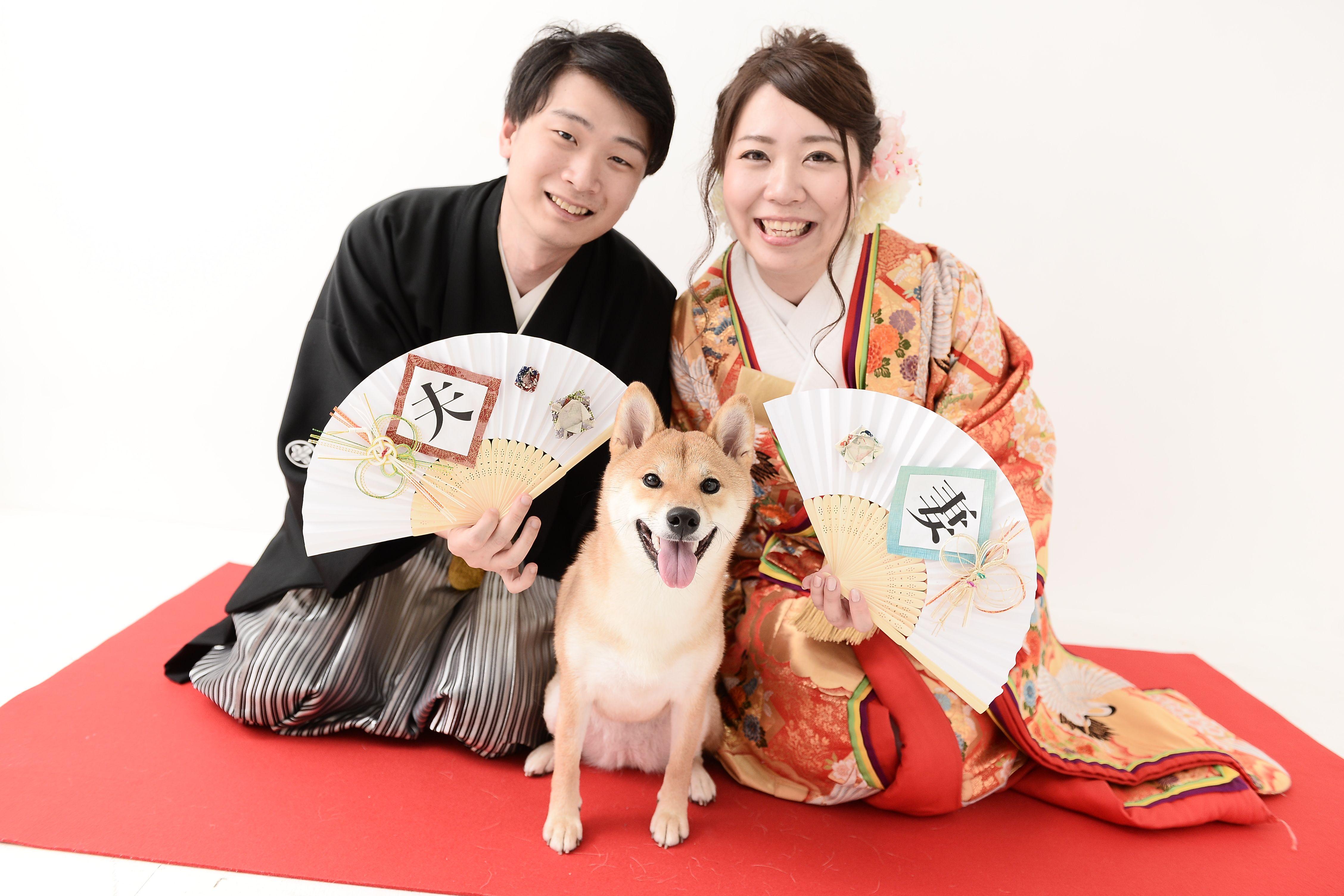 和装で柴犬 Japanesestyle ウェディングフォト ウェディング 柴犬
