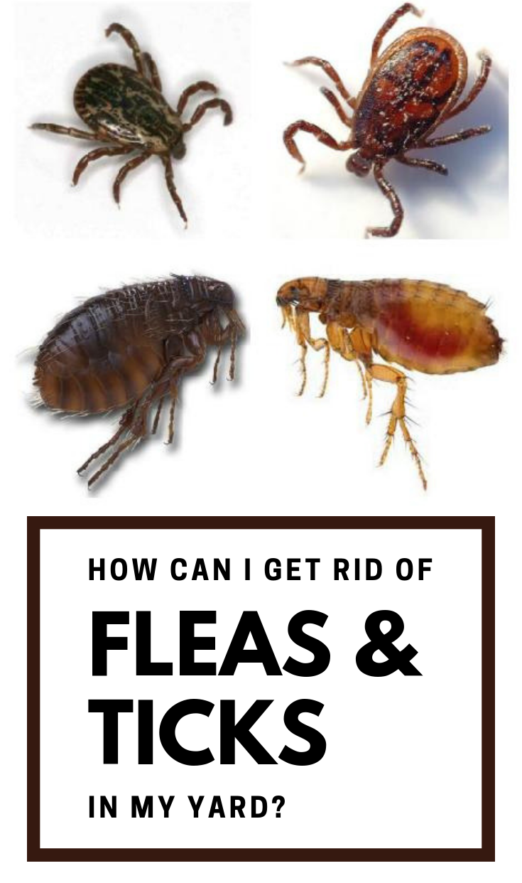 226bd28dc91005faecdf99d86cf44423 - How To Get Rid Of Fleas Without Spending Money