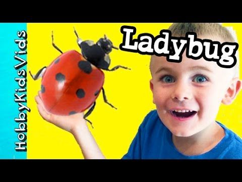 LadyBug in Trouble! HobbyFrog Helps Try to Save an Insect Trapped HobbyK...
