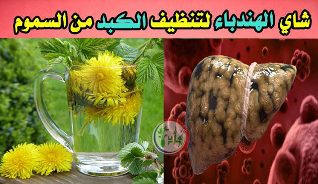 لماذا يجب أن نتناول شاي الهندباء لتنظيف الكبد من السموم كل مساء Dandelion Tea Dandelion Glassware