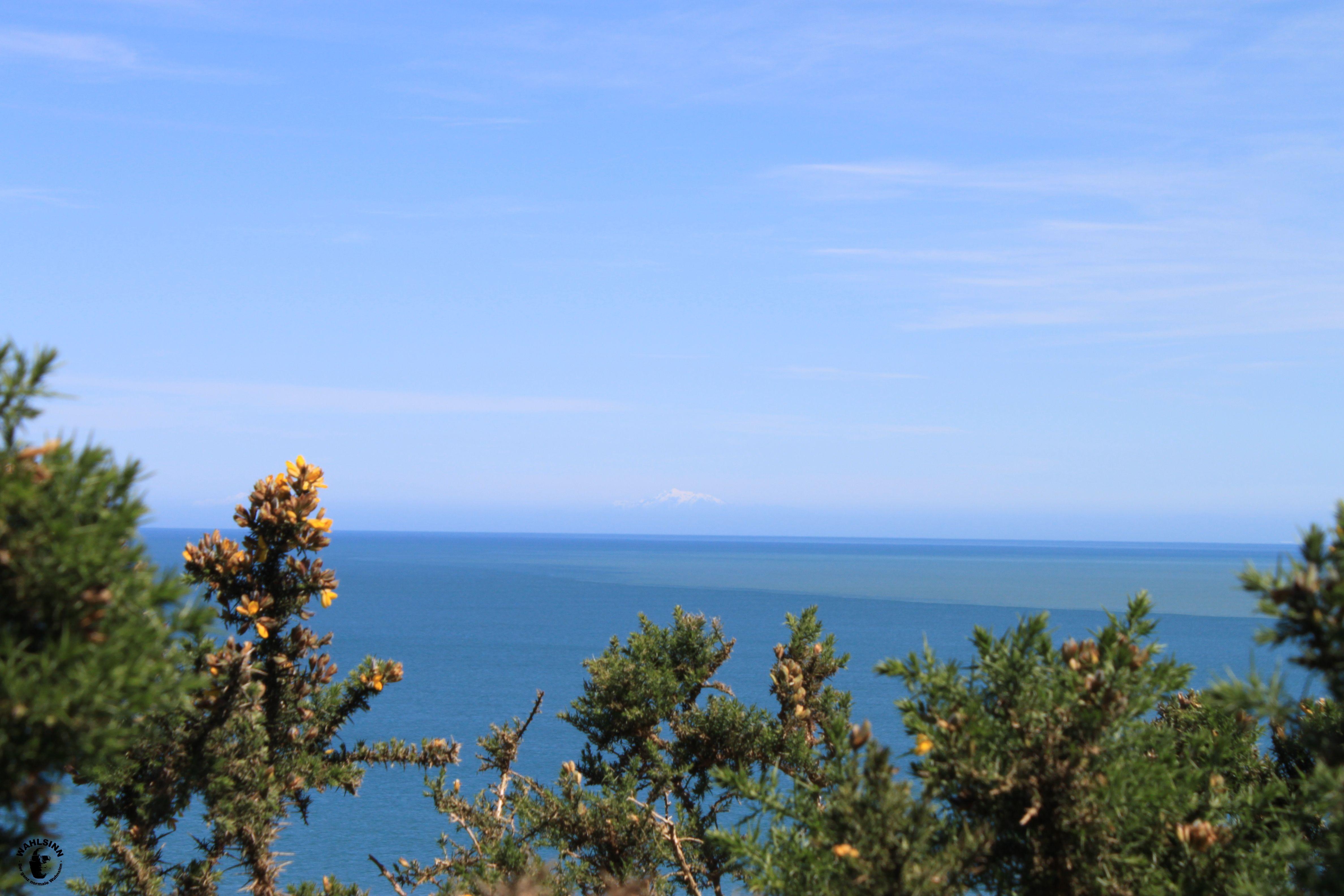 Der Busch verspeert die schöne Aussicht (Neuseeland)