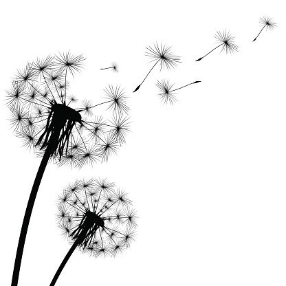 Dandelion Illustrations Royalty Free Vector Graphics Clip Art Dandelion Art Dandelion Drawing Dandelion Tattoo