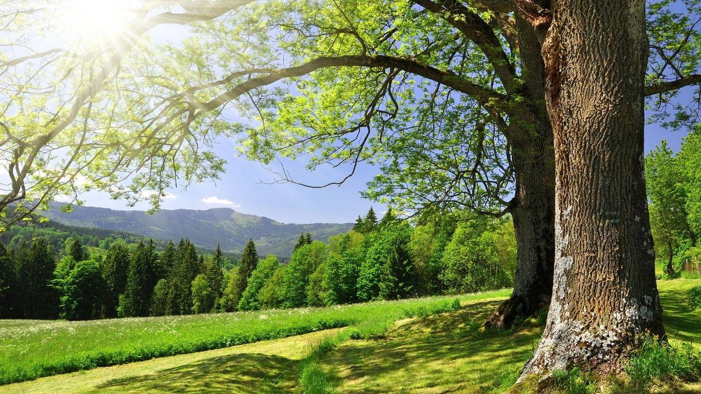 Imagenes de naturaleza hermosa en hd gratis para descargar for Naturaleza hermosa