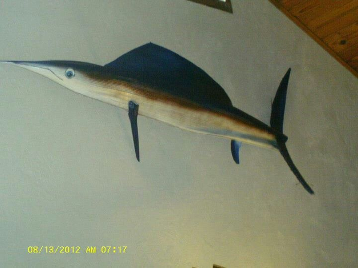 Palm boot marlin with brown striping.