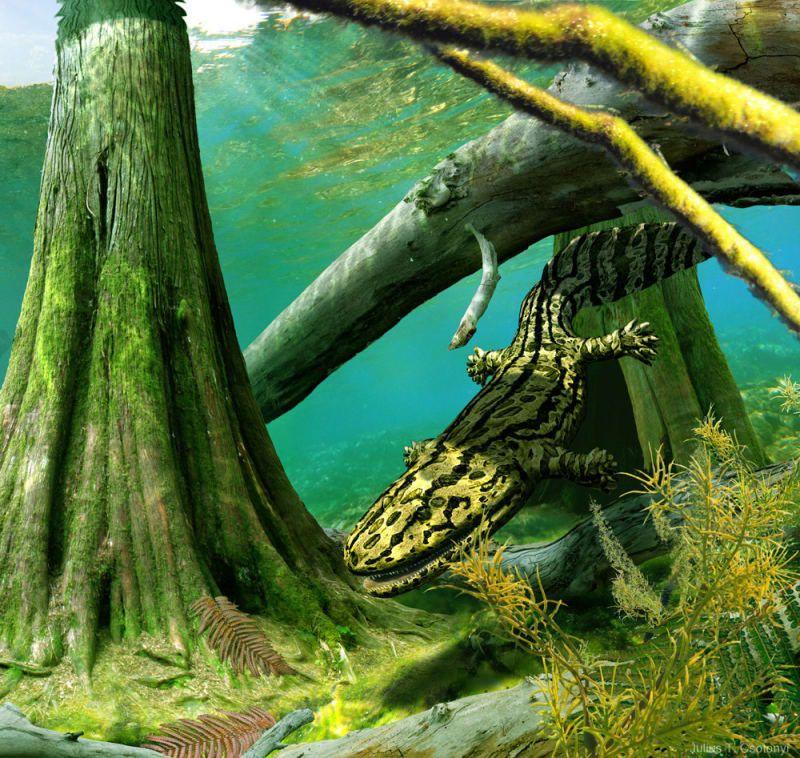 """El Acanthostega vivió durante el período Devónico, momento en el cual los vertebrados comenzaron a trasladarse del agua a la tierra. Csotonyi dice: """"A pesar de que el Acanthostega tenía patas con dedos en lugar de aletas, su anatomía era más apta para la vida en el agua, ya que usaba sus patas para trepar dentro de su ambiente acuático""""."""
