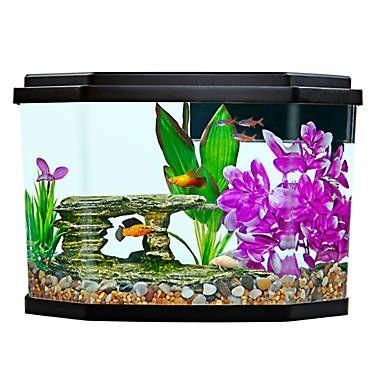 Top Fin® Delight Aquarium 3.5 Gallon Betta fish