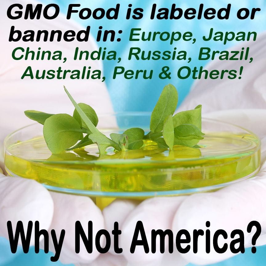 Let S Label Gmo Foods In The Usa Http Justlabelit Org Gmo Foods Genetically Modified Food Gmo