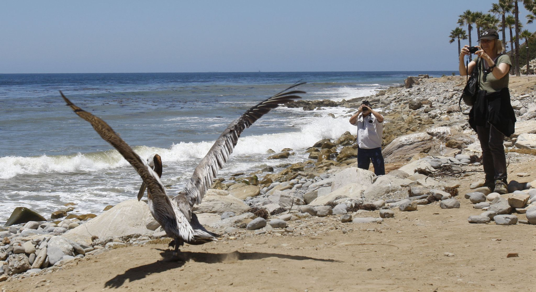 Pelican whose mutilation sparked outrage is released into the wild  It happened quickly, much like his recovery.   http://www.latimes.com/local/lanow/la-me-ln-mutilated-pelican-released-into-wild-20140603-story.html