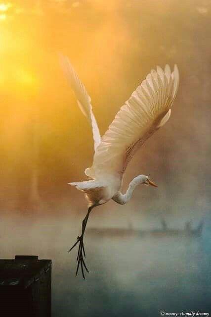 La morte non è un tramonto che cancella tutto, ma un passaggio, una migrazione e l'inizio di un'altra vita per ogni vita.  Cicerone