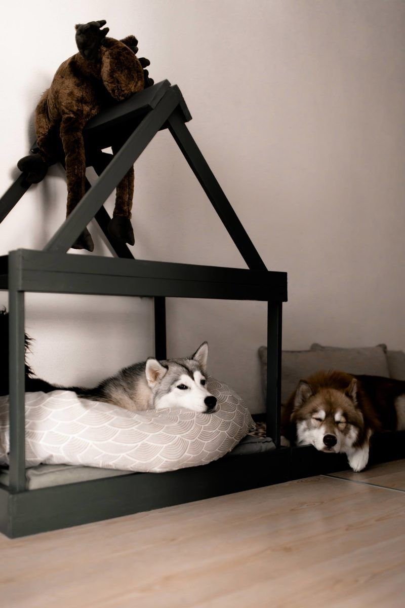 So Einfach Kann Man Sich Eine Moderne Hundehutte Fur Die Wohnung Selber Bauen The Pawsome Tyroleans In 2020 Hundehutte Hunde Haus Wohnung Hund