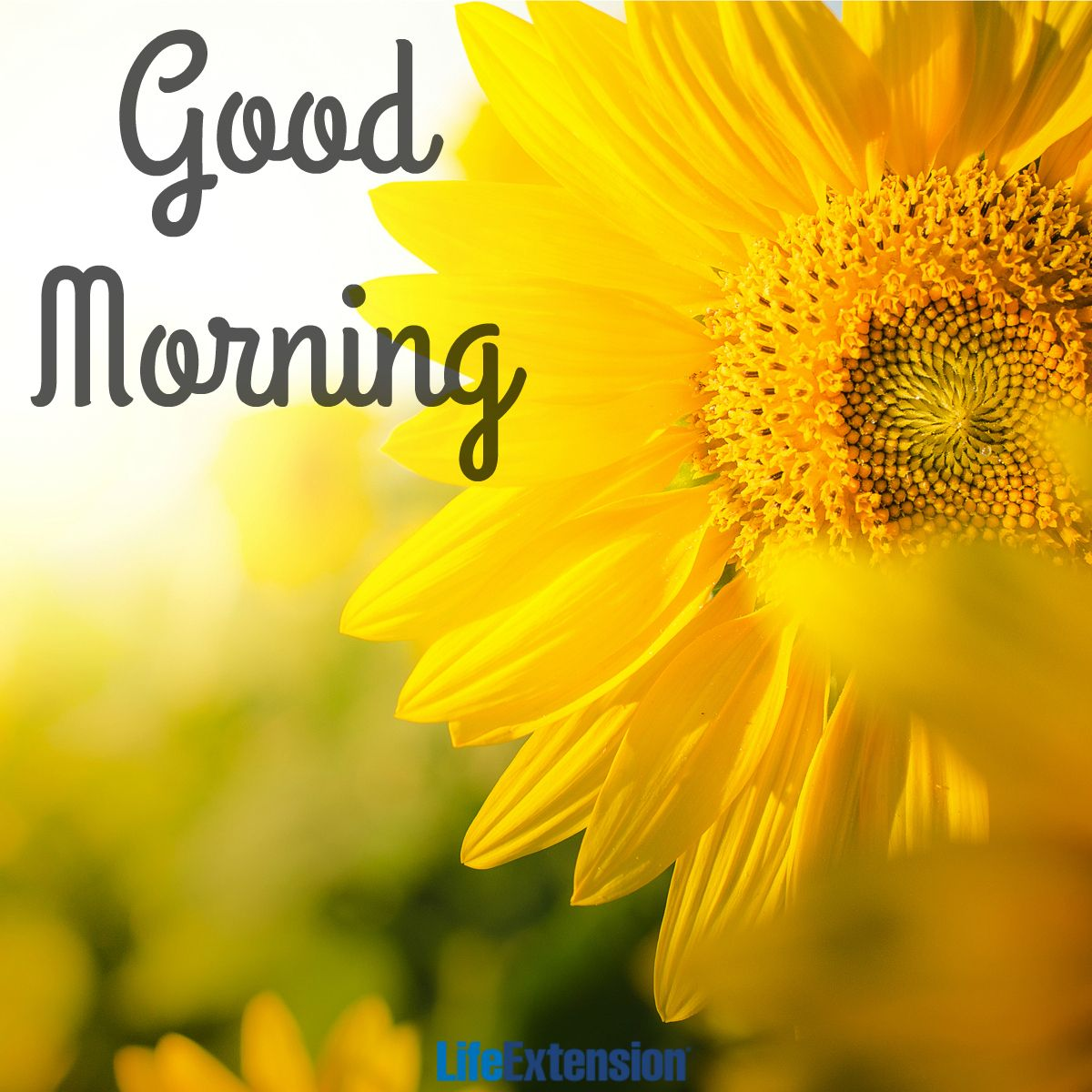 Good Morning Happy Life Quotes: Good Morning & Happy Monday From All Of Us Here At Life