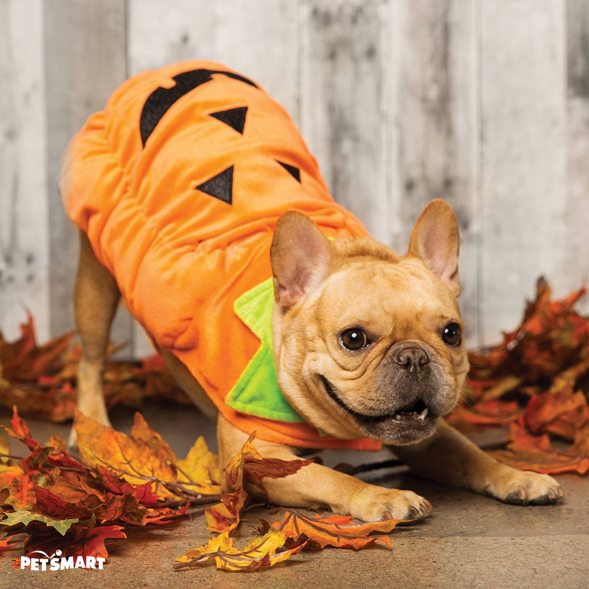 This JackOLantern dog costume is sure to brighten up