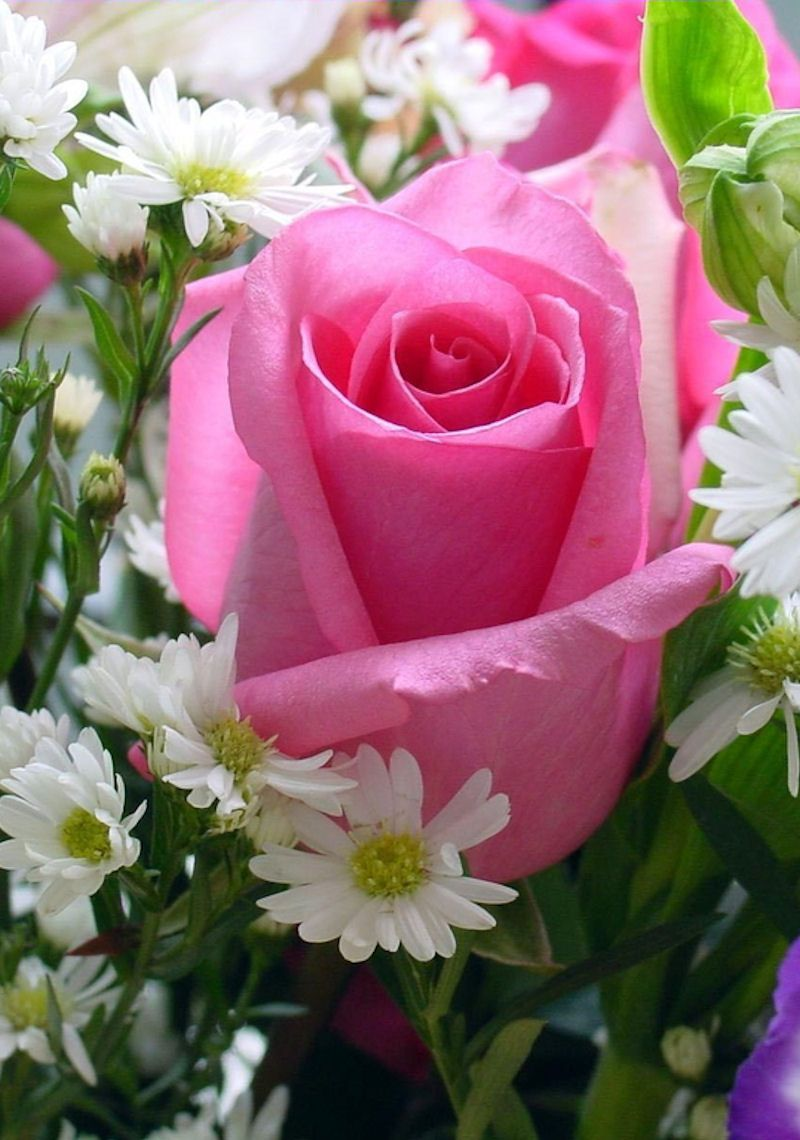 .A pink Rose as a beautiful reminder of my friend. This is