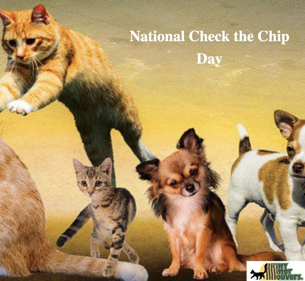 National Check the Chip Day. Have you checked their chip