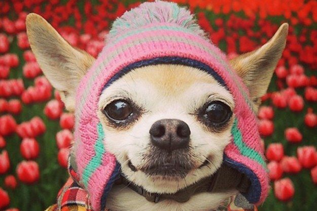 You Need This Extremely Fashionable Dog In Your Life