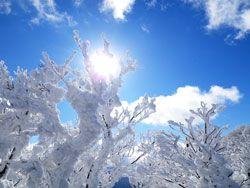 太陽に照らされた霧氷はホントにホントにきれいです。
