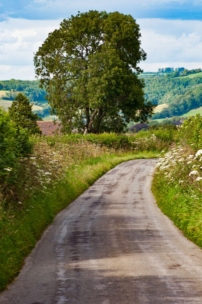 Country Lane in 2019 | Amazing Photography | Country roads