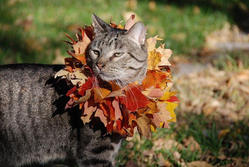 этом смешные фото осень пришла пике славы
