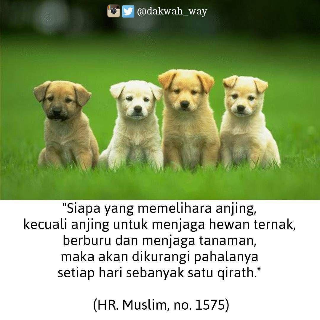 Pesan Cinta HappyHoppyID Utk Sahabat Muslimah Tampilan Sporty