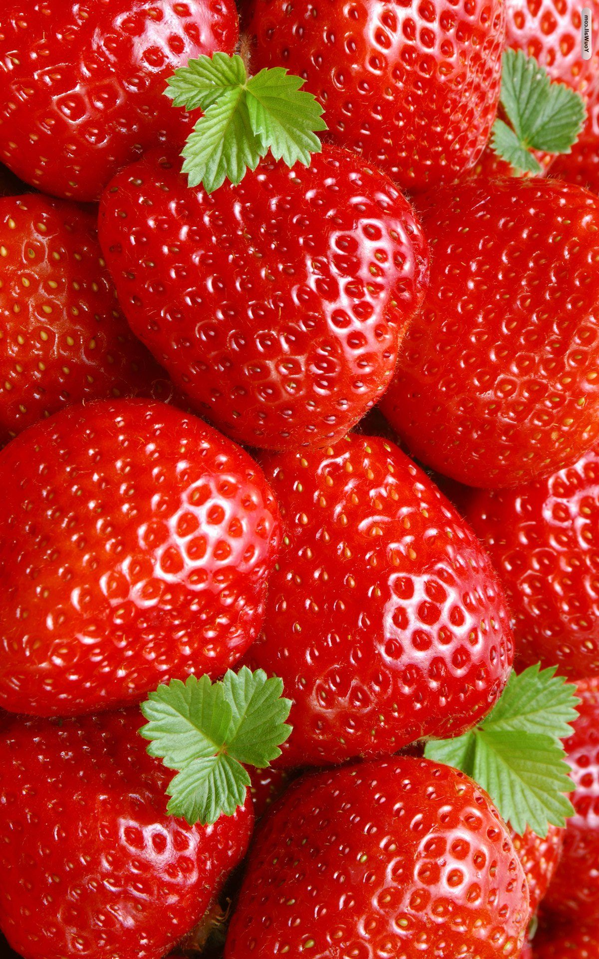 Strawberry Wallpaper IPhone 6