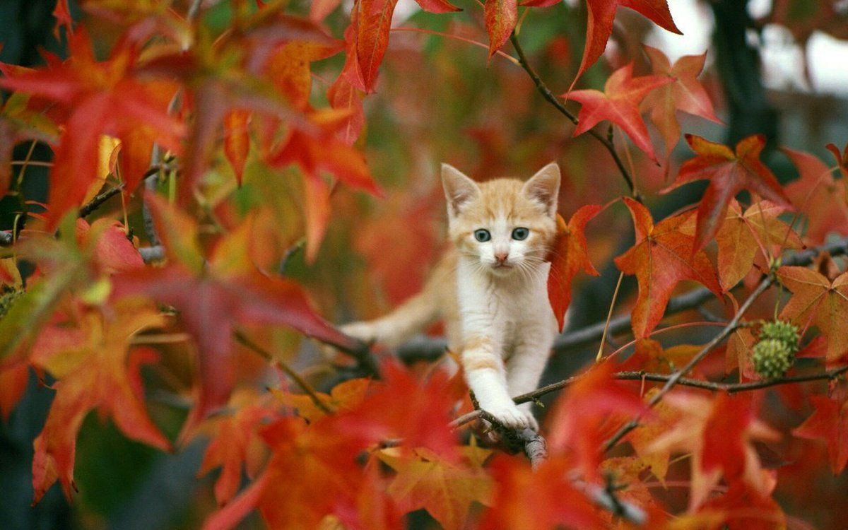 Have a beautiful and sweet day gorgeous cats